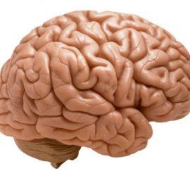 breinkennis-hersenen