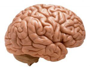Breinkennis en 21st century skills